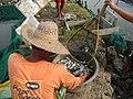 5798Isla Babatnin Malolos Bulacan Harvesting Fishes 28.jpg