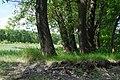 68-209-5001 Бубнівський ліс.jpg