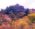 A@a askas village cyprus - panoramio.jpg