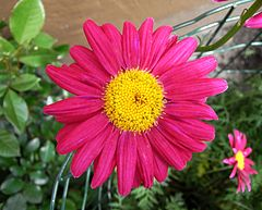 A Blume 01be wp3.jpg