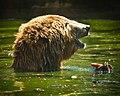 A Kamcsatkai medve.jpg