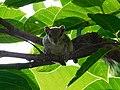 A Squirrel Between The Leaves.jpg