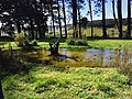 A beautiful view at Horton Plains National Park.jpg