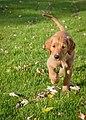 A dog - 6252881250.jpg