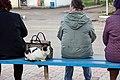 A feral cat in Uspenskoe, Russia-1.jpg