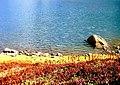 A lake in kashmir.jpg