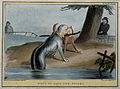 A large dog, emerging from the water, with the head of the D Wellcome V0050264.jpg