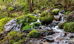 A stream on a track between Sabine Hut and Speargrass Hut, Nelson Lakes National Park, New Zealand.jpg