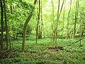 A tranquil scene in Oakshott Hanger - geograph.org.uk - 1324340.jpg