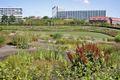 Aarhus botanical garden 1.jpg