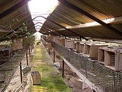 Battery Cage Wikipedia