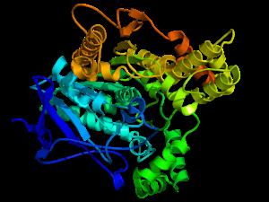 Cholinesterase - Image: Acethylcholinesteras e TC 1EA5