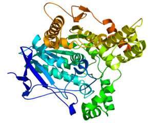 esterase that lyses choline-based esters, several of which serve as neurotransmitters