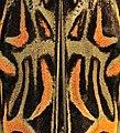 Acrocinus longimanus - Besouro-da-figueira - Arlequim 03.jpg