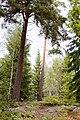 Adelsö 154-1.jpg