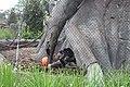 African Forest exhibit c, Jacksonville Zoo.jpg