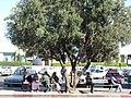 Agadir, street.jpg