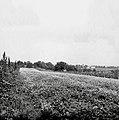 Ajdova njiva, Vrh pri Šentjerneju 1952.jpg