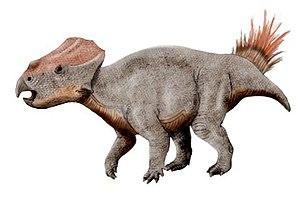Csehbánya Formation - Ajkaceratops