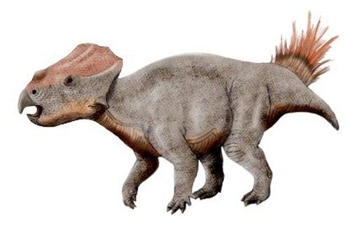 Ajkaceratops NT