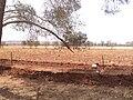 Al Marj farm.JPG