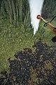Alaska National Guard fights Alaska wildfires 150604-A-DL550-051.jpg