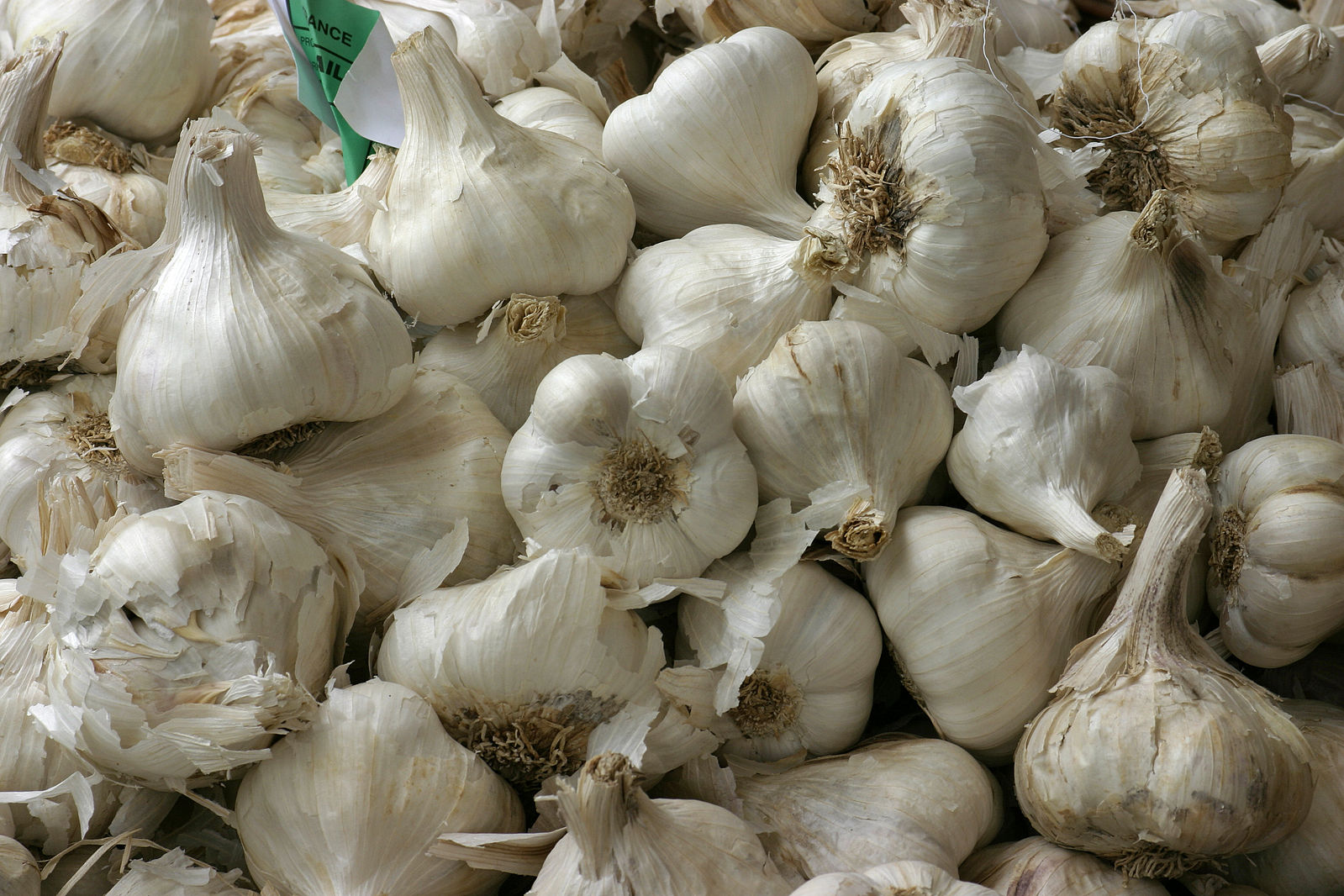 garlic allium sativum as a major These plants, garlic (allium sativum) with its major ingredients, s-allylcysteine and s-allylmercapto-l-cysteine organosulfur compounds (oscs), have long been known to have medicinal.