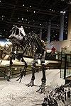 Allosaurus 2 salt lake city.jpg