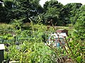 Allotments between the cemetery and railway - geograph.org.uk - 908497.jpg