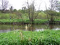 Along the Camowen River - geograph.org.uk - 1270991.jpg