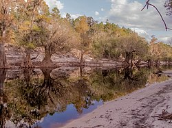 Along the Suwannee - panoramio (1).jpg