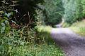 Alsace Guiguir68 03.jpg
