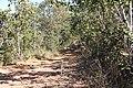 Alto Araguaia - State of Mato Grosso, Brazil - panoramio (599).jpg