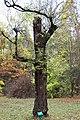 Americká zahrada - Chudenice - Okres Klatovy. (003).jpg