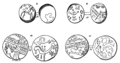 Ancient British Coins found in Surrey (2) (Surrey Archaeological Collections).png