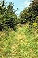 Ancient Trackway - geograph.org.uk - 524275.jpg