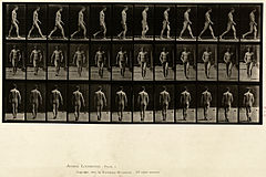 Animal locomotion. Plate 1 (Boston Public Library).jpg