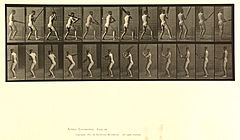 Animal locomotion. Plate 292 (Boston Public Library).jpg