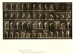 Animal locomotion. Plate 490 (Boston Public Library).jpg