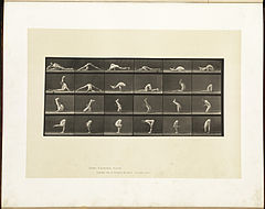 Animal locomotion. Plate 510 (Boston Public Library).jpg