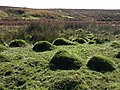 Anthills near the Plym - geograph.org.uk - 1530645.jpg