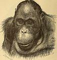 Anthropogenie; oder, Entwickelungs-geschichte des Menschen (1910) (18748748003).jpg