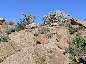 Plants of the Anza-Borrego Desert Park, San Di...