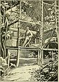 Apes and monkeys; their life and language (1900) (14771538284).jpg