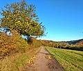 Apfelbaum bei Merchingen.jpg