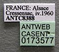 Aphaenogaster subterranea casent0173577 label 1.jpg