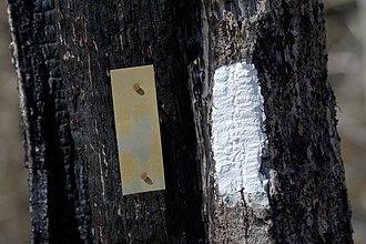 Wayah Bald - Image: Appalachian & Bartram Trail cross at Wayah Bald, NC