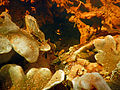 Aquatic Biofilm subaquatique freshwater 2015PrintempsLamiot 14.JPG