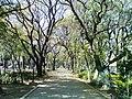 Arboles. - panoramio (2).jpg