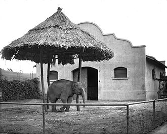Selig Polyscope Company - Asian elephant at the Selig Zoo, ca. 1920